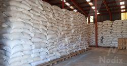 Buena respuesta a programa de captación de maíz SEGALMEX en Dzitbalché